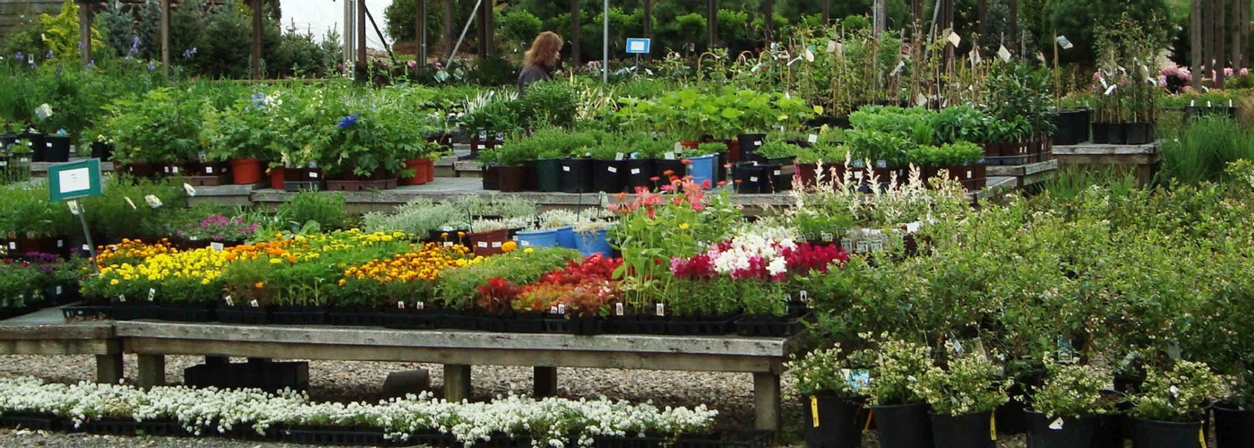 Viveros y jardines brioagro for Viveros en colombia