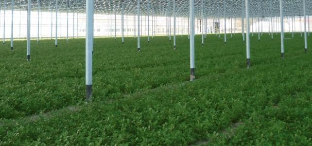 greenhouse_solar_pannels