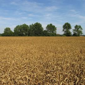 La producción agrícola deberá aumentar un 70%