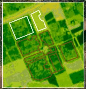 Imagen de satélite NDVI donde podemos observar el indice de vegetación de las diferentes zonas de la parcela