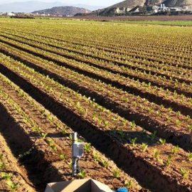 BrioAgro, la empresa que se lo pone fácil y barato a los agricultores